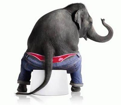 elephant-panty